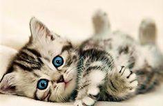 #baby #cat #cute