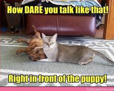 There are a lot of funny pictures and funny memes goes viral on social media. But we find and share 25 today's funny picdumps that make your day. Cat And Dog Videos, Funny Dog Videos, Funny Animal Pictures, Funny Animals, Cute Animals, Funniest Animals, Pet Pictures, Hilarious Pictures, Jungle Animals