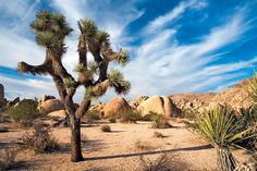 Joshua Tree National Park -- who else likes the starkness there?