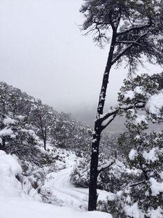 Fotos de la semana: Paisajes invernales de México. Sierra de Arteaga, Coahuila | México Desconocido