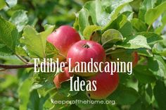 Edible landscaping is a useful alternative to the traditional landscape because it serves numerous purposes instead of being solely ornamental. Landscaping Tips, Garden Landscaping, Landscape Design, Garden Design, Cottage Garden Plants, Cottage Gardens, Plant Pictures, Shade Trees, Traditional Landscape