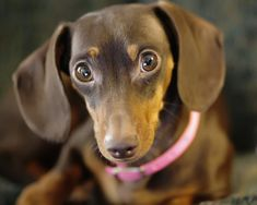 Wide Eyed and...Innocent? by Yer Photo Xpression, via Flickr