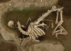 Very strange Gallo-Roman horse and human burials at Clos au Duc: Les pratiques funéraires inconnues de la nécropole antique du «Clos au Duc» à Evreux - Institut national de recherches archéologiques préventives
