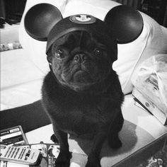 Disney pug