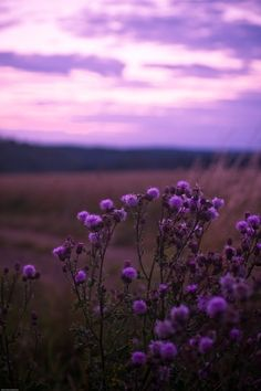 Beautiful Flowers - Radiant Orchid Landscape