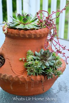 Easy Container Garden Ideas for the Lazy Gardener container garden ideas-hens and chicks in a strawberry potcontainer garden ideas-hens and chicks in a strawberry pot Strawberry Planters, Strawberry Garden, Succulent Pots, Cacti And Succulents, Container Gardening, Gardening Tips, Organic Gardening, Garden Pots, Garden Ideas