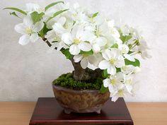 姫りんご盆栽 Malus prunifolia bonsai