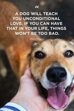 Dog Quotes That Will Melt Your Heart : Dog Quotes Dog Quotes That Will Melt Your Heart : Dog Quotes Unconditional Funny Quotes For Kids, Love Quotes Funny, Funny Quotes About Life, Funny Kids, Funny Sayings, Funny Memes, Dogs And Kids, Animals For Kids, Baby Animals