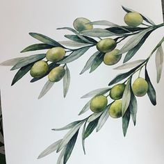Image may contain: plant, flower, nature and outdoor Art And Illustration, Watercolor Illustration, Botanical Drawings, Botanical Prints, Watercolor Plants, Watercolor Paintings, Watercolour Tutorials, Art Graphique, Art Inspo