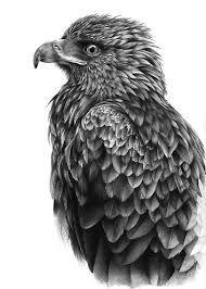 Image result for birds artist