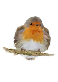 Robin Instant Download