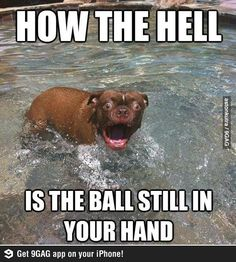 I think we can all share that feeling The 61 Most Awkward Moments In The History Of Dogs Funny Animals Of The Day - 25 Pics It's Only the Start of Spring. If I had to name some animals. Funny Animal Pictures Of The Day - 25 P. Funny Animal Jokes, Funny Dog Memes, Cute Funny Animals, Animal Memes, Funny Cute, Funny Dogs, Cute Dogs, Funny Pitbull, Animal Humor