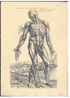 De humanis corporis fabrica