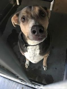 ADOPTED 1/15 BUT ADOPTER CHANGED THEIR MIND AND REDUMPED HIM 1/22!!! - Dumped by the children of the dog's deceased owner.