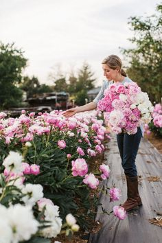 "Peonies Are the ""Ultimate Queen of Spring"" Flower The Proper Care and Maintenance of the ""Ultimate Queen of Spring."" Feature article in Country Living.The Proper Care and Maintenance of the ""Ultimate Queen of Spring."" Feature article in Country Living. Growing Peonies, Growing Flowers, Cut Flowers, Spring Flowers, Planting Flowers, Beautiful Flowers, Exotic Flowers, How To Grow Peonies, Purple Flowers"