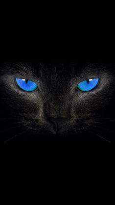 Iphone Wallpaper - New Sites Cat Wallpaper, Animal Wallpaper, Iphone Wallpaper, Pretty Cats, Beautiful Cats, Animals Beautiful, Animals And Pets, Funny Animals, Cute Animals