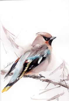 Waxwing Bird Painting, Original Watercolor Painting, Watercolour Art, Modern Art, Bird Art by CanotStop on Etsy