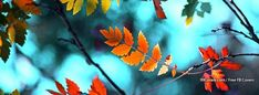 Fall Cover Photos, Fall Facebook Cover Photos, Beautiful Facebook Cover Photos, Cover Pics, Autumn Leaves Background, Leaf Background, Cover Wallpaper, Fall Wallpaper, Fb Banner