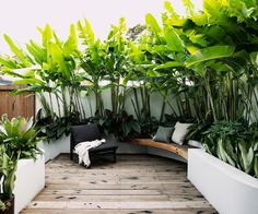 A small tropical garden with low-maintenance plants - - This award-winning design transforms a petite patch into an inviting, tropical-themed outdoor room.