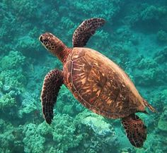 Sea Turtle Conservation Projects: A Sea Turtle's Tale