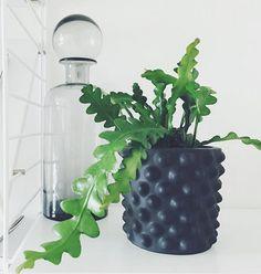 8 trendiga växter som är inredarnas stora favoriter – Metro Mode