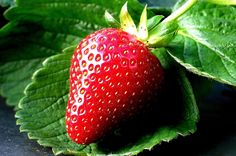 Strawberry of Ciwidey Bandung West Java