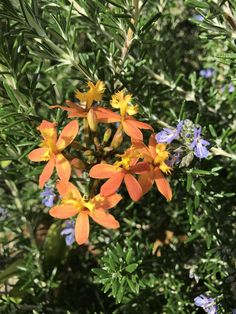 Orchids in flower among the rosemary bonus bee #gardening #garden #DIY #home #flowers #roses #nature #landscaping #horticulture