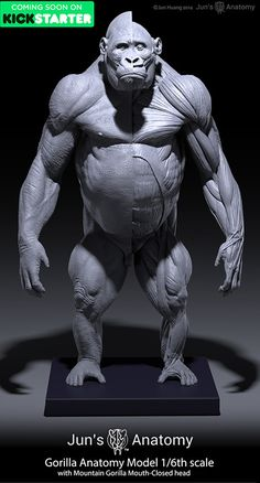 Gorilla Anatomy Models, Jun Huang on ArtStation at https://www.artstation.com/artwork/PVzRo