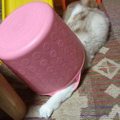 隠れてるつもり(笑) #猫#ねこ#cat#大好き#可愛い#カメラ
