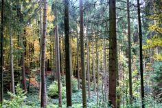 Auf Waldspaziergang mit Heike und Ulla Der Herbst ist fast vorbei, die Luft klirrt schon vor Kälte und an den Ästen der Bäume klebt der Raureif. Und der Wald? Ist gerade pitschepatsche nass - brrrrrrr….! Es tröpfelt von den spitzen Nadeln der Tannenwipfel und die nur noch sporadisch mit Laub behängten Laubbäume lassen die triefenden…