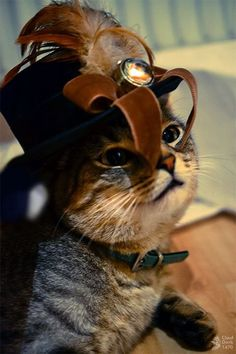 Steampunk cats - interprets ancient maps and hieroglypics Chat Steampunk, Corset Steampunk, Steampunk Fashion, Cute Cats And Kittens, Cool Cats, Animals Beautiful, Cute Animals, Steampunk Animals, Rabbits