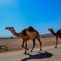 Arabian Desert by Digy Music Pro on SoundCloud