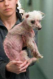 Another victim of a puppy mill.