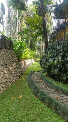 #Green #garden #backyard