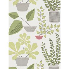 MissPrint House Plants Wallpaper, Olive MISP1176 Online at johnlewis.com