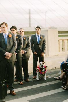 A Downtown Dallas Wedding With A View! Dallas Wedding, Photo Online, Wedding Photos, Wedding Ideas, Celebrity Weddings, Wedding Vendors, Wedding Colors, Real Weddings, Wedding Planning