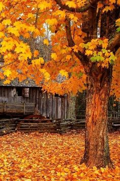 # Autumns blanket of leaves..