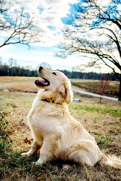 Astonishing Everything You Ever Wanted to Know about Golden Retrievers Ideas. Glorious Everything You Ever Wanted to Know about Golden Retrievers Ideas. Baby Dogs, Pet Dogs, Dog Cat, Doggies, Wiener Dogs, Beautiful Dogs, Animals Beautiful, Cute Animals, Wild Animals