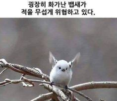 Fat Animals, Animals And Pets, Funny Animals, Animal Pictures, Funny Pictures, Punny Puns, Bird Drawings, Cute Birds, Life Humor
