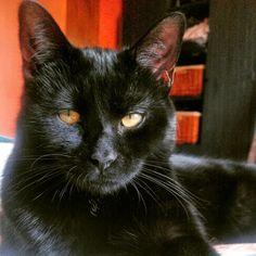 Hey World Domination, Cats, Animals, Gatos, Animales, Animaux, Animal, Animais, Kitty