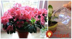 Spomínate si, kedy naposledy vaše rastliny kvitli tak krásne, ako tie v kvetinárstve. Bohato obsypané a plné kvety ako z obchodu však môžete mať aj vy. Stačí poznať jednoduchý trik.