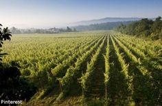 Vinho verde dosłownie oznacza zielone wino. Jest to nazwa regionu winiarskiego na północy Portugalii oraz wytwarzanego w nim winogronowego trunku. Określenie vinho verde nie ma oczywiście związku z kolorem alkoholu, ale z jego świeżością i młodością. To portugalskie wino butelkuje się bowiem wkrótce po zbiorach i pije jako bardzo młode (9-18 miesięcy). W celu zachowania świeżości i kwasowości stosuje się nawet zabiegi zatrzymujące proces fermentacji.