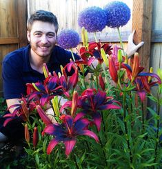 Tango Lily Bulbs Red & Black Flowers  plant now for flowers