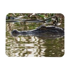 Alligator Image, Swamp Water, Keep It Cleaner, Magnets, Slidell Louisiana, Swamp Thing, Gender, Island, Group