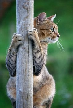 http://pinterest.com/maryannrizzo/kitty-cats/