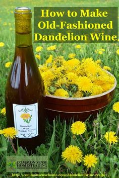 """How to Make Old-Fashioned Dandelion - A homemade dandelion wine recipe """"so therapeutic to the kidneys and digestive system that it was deemed medicinal even for the ladies. Homemade Wine Recipes, Moonshine Recipes Homemade, Homemade Alcohol, Homemade Liquor, Dandelion Recipes, Dandelion Wine, Alcoholic Drinks, Beverages, Food Photography"""