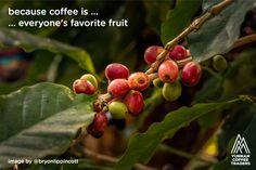 becausecoffeeis ... ...everyone'sfavoritefruit / imageby@bryonlippincott