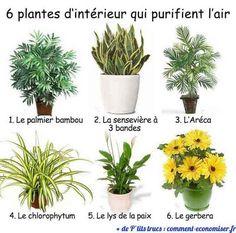 6+Plantes+d'Intérieur+Qui+Purifient+l'Air.
