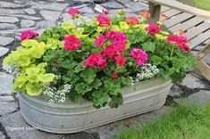 Beautiful Flowers in Junky Containers Flowers in small trough. MORE Beautiful Flowers in Junky Containers via Flowers in small trough. MORE Beautiful Flowers in Junky Containers via Container Flowers, Flower Planters, Garden Planters, Succulent Containers, Fall Planters, Galvanized Planters, Outdoor Flower Pots, Full Sun Container Plants, Porch Planter