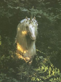 """""""Great heroes need great sorrows and burdens, or half their greatness goes unnoticed. It is all part of the fairy tale. Beagle, The Last Unicorn Fantasy Unicorn, Diy Unicorn, The Last Unicorn, Magical Unicorn, Real Unicorn, Beautiful Unicorn, White Unicorn, Pegasus, Magical Creatures"""